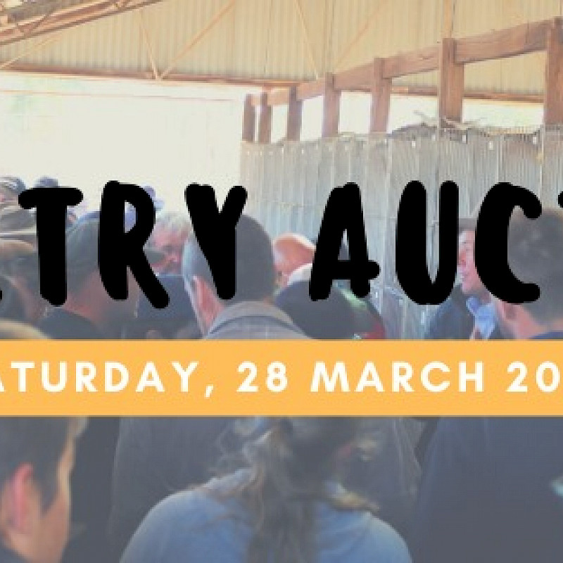 Annual Poultry Auction image